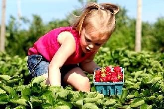 http://www.winsomeforest.com/lyman_orchards2.jpg